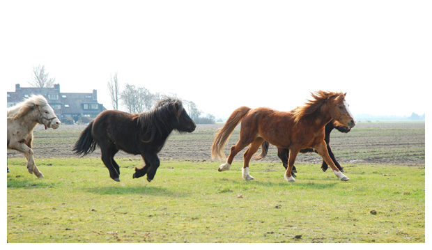 paard, paarden, paardenfotos, paardenfoto´s