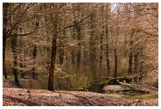 foto's, provincie Flevoland