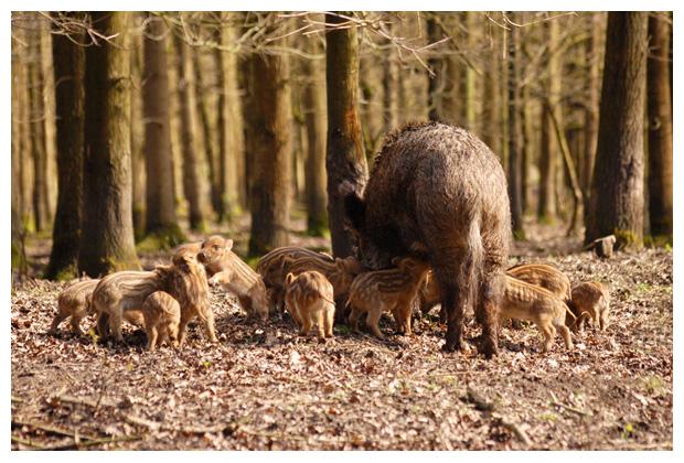 foto's, Natuurpark Lelystad, Flevoland, Nederland