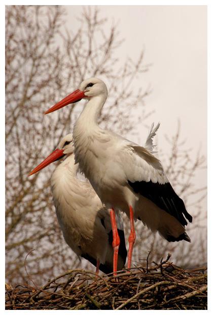 foto's, Natuurpark Lelystad, Flevoland