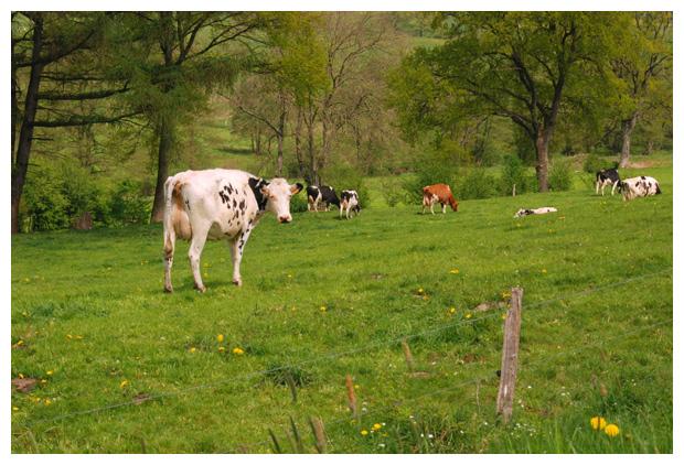 foto´s, Stavelot, Belgie, landschapsfoto´s, landschapsfoto's