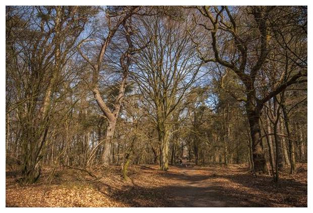 foto's, natuurgebied Wolfhezerheide, Gelderland, Nederland