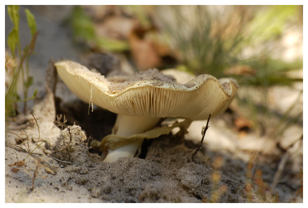 paddenstoel, paddenstoelen, paddenstoelfotos, paddenstoelfoto´s, paddenstoelenfoto, paddenstoelenfoto´s, paddestoel, paddestoelen, paddestoelfoto´s, paddestoelenfoto, paddestoelenfoto´s