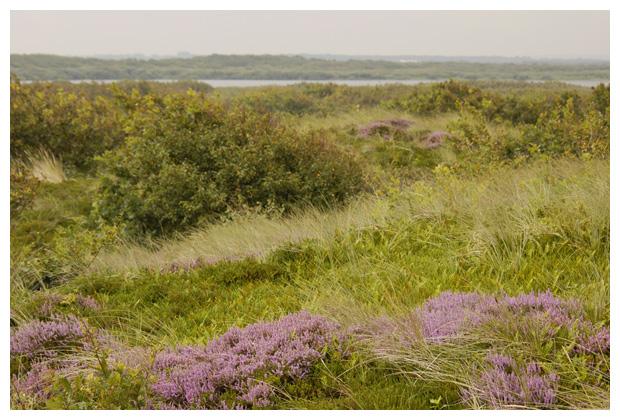 foto´s, Zwanenwater, Callantsoog, Noord Holland, Nederland