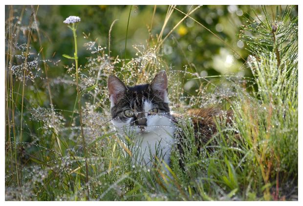 foto's, Kat of huiskat (Felis catus), poes