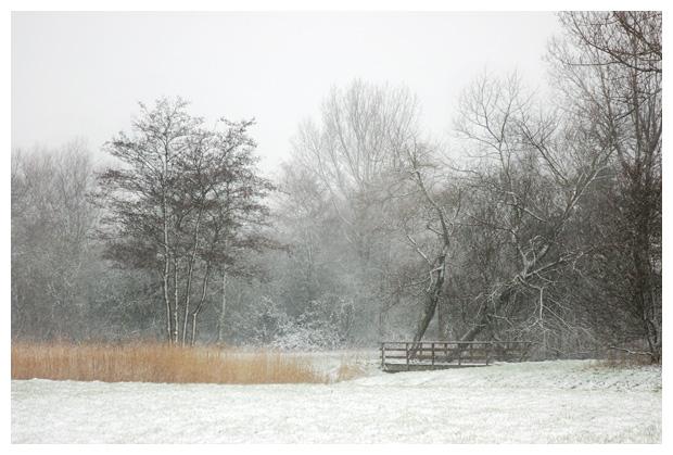 winter, winters, winterlandschap, winterlandschappen