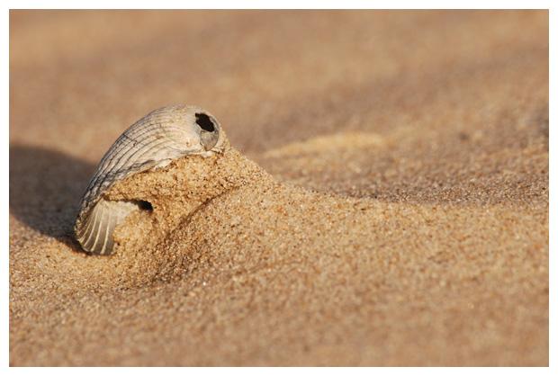 foto's, kokkel, schelpen, schelpje, schelpjes, strand