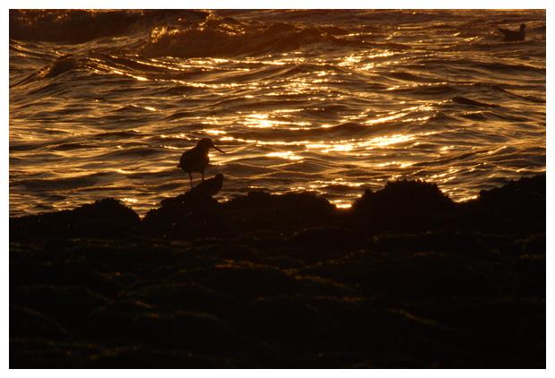foto's, Groote Keeten, Noord-Holland, Nederland, strand