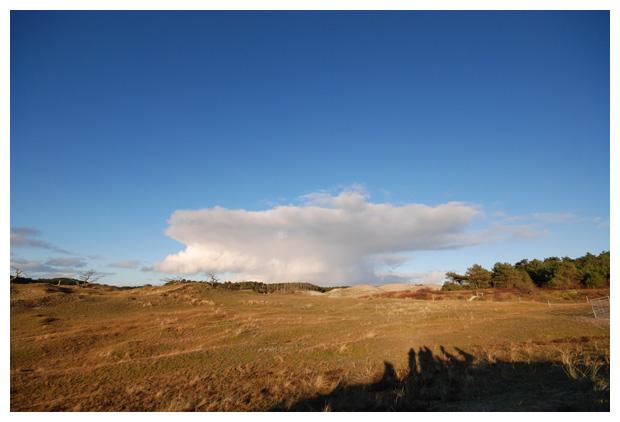 foto's, natuurgebied Schoorlse duinen, Staatsbosbeheer, Noord-Holland