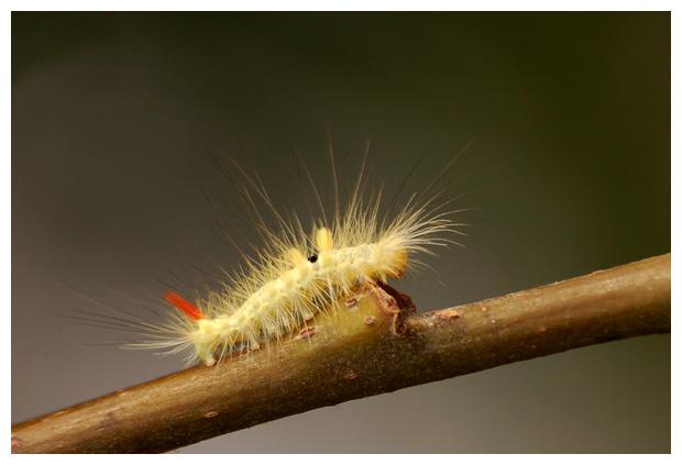 foto's, insect, insecten, insectfoto´s, insectenfotos