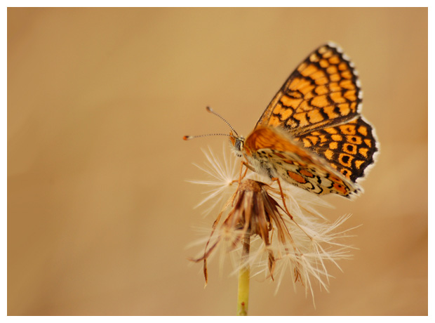 foto's, diverse verschillende soorten, vlinder, vlinders, dagvlinder, nachtvlinder, rups