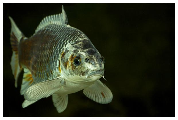 foto´s, diverse soorten, verschillende vis, vissen, Chordadieren (Chordata)