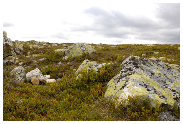 foto's, Gewoon landkaartmos (Rhizocarpon geographicum), korstmos