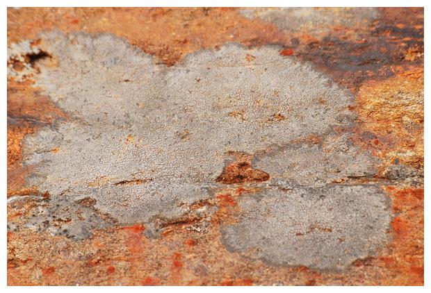foto´s, Zwarte grafkorst (Placynthium nigrum), korstmos