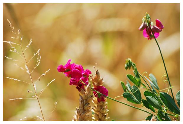 bloemen, bloem, bloemenplaatje, bloemenplaatjes, bloemenfoto's
