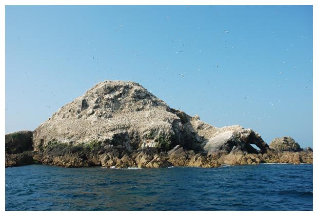 foto's, Les Sept Îles, vogelreservaat, regio Bretagne, Frankrijk