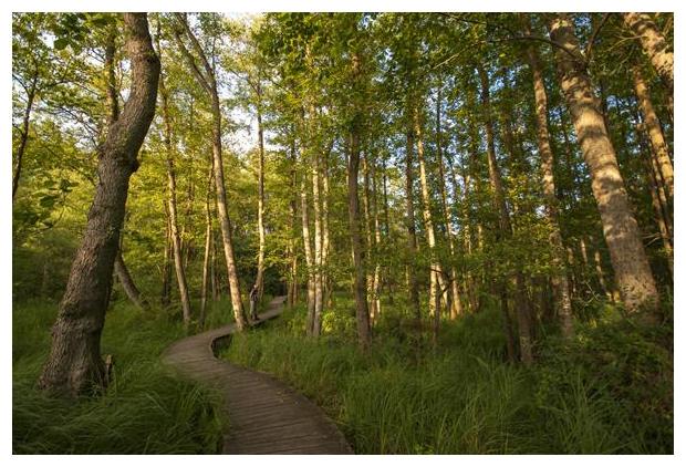 foto's, Nationaal Park De Meinweg, Limburg, Nederland