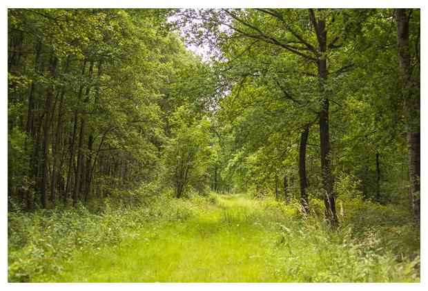 foto's, natuurgebied, Weerterbos, Weert, Limburg, Noord-Brabant