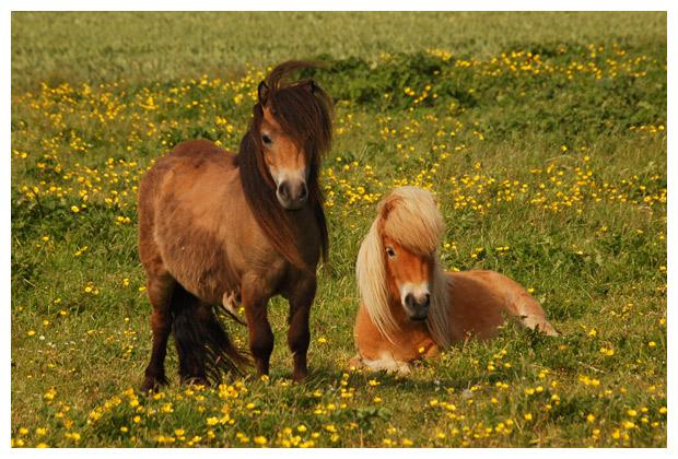 foto´s, paard, paarden, paardenfotos, paardenfoto´s