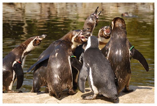 foto's, Aqua Zoo, Provincie Friesland, Holland