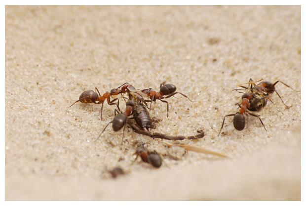 foto´s, Plooivleugelwespen (Vespidae), wesp, insect