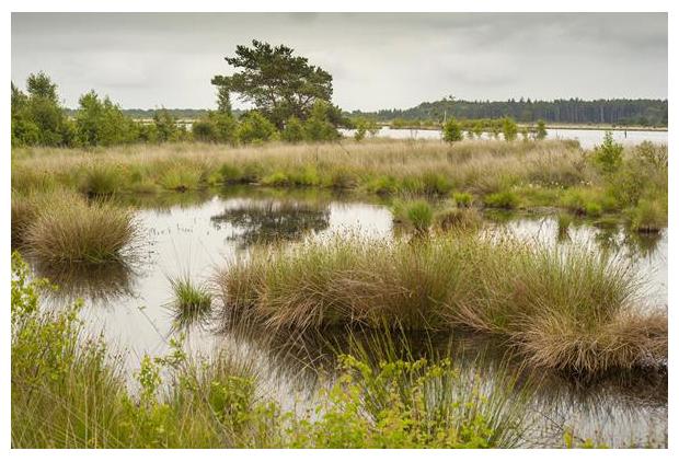 foto's, natuurgebied Fochteloërveen, Friesland en Drenthe, Nederland
