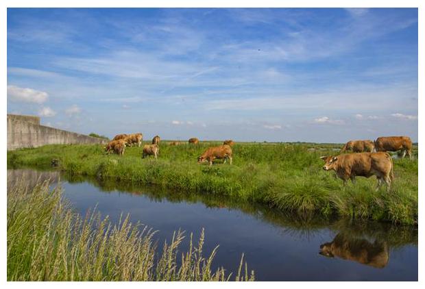 foto's, natuurgebied Zuidlaardermeergebied, Onnerpolder, Groningen, Nederland