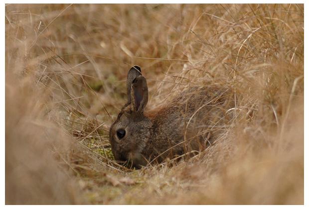 foto´s, diverse soorten, verschillende konijn, konijnen, konijntje, konijntjes