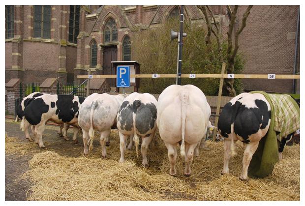 foto's, Paasvee, Paasveetentoonstelling, Schagen, 2008