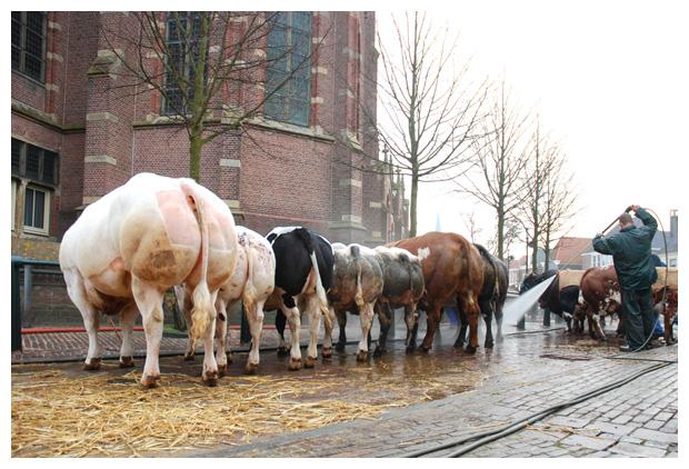 foto's, Paasvee, Paasveetentoonstelling, Schagen, 2010