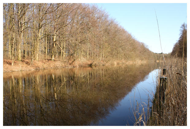 foto's, natuurgebied, Robbenoordbos Den Oever