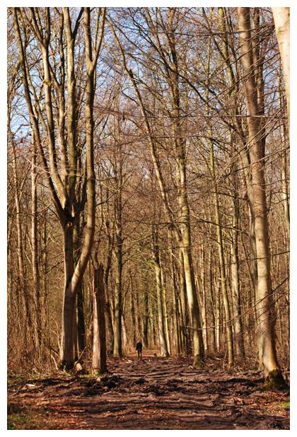 foto's, Robbenoordbos, Den Oever, Noord Holland, Nederland