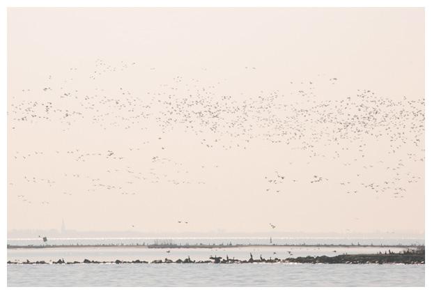 foto´s, IJsselmeer, Noord-Holland, Nederland
