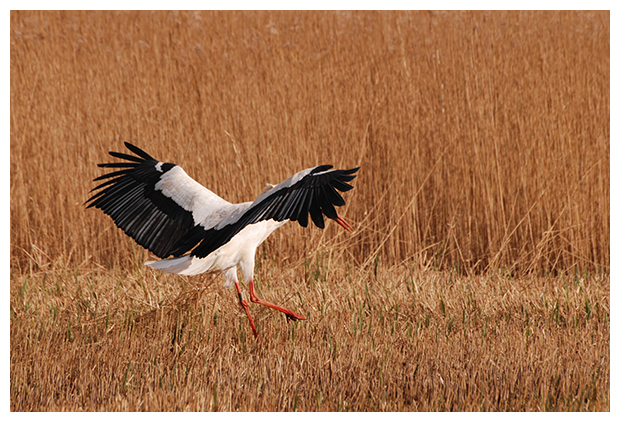 foto's, Nationaal Park De Alde Feanen, Friesland, Nederland
