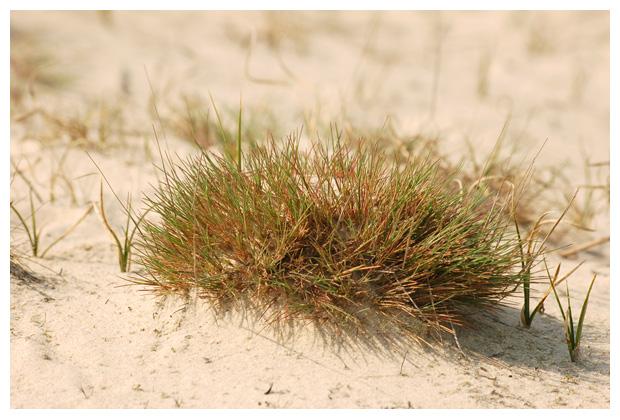 verschillende soorten gras