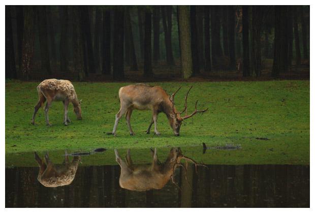 foto's, provincie Noord-Brabant