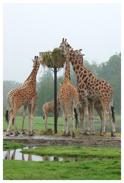 foto´s, Safaripark, Beekse Bergen, Hilvarenbeek