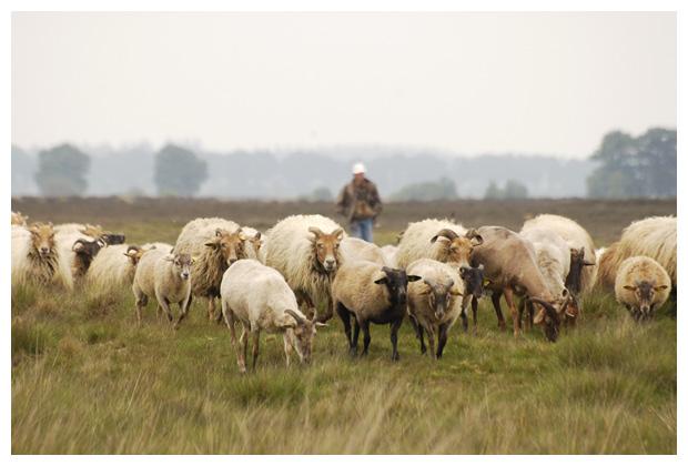 foto's, Nationaal park Dwingelderveld, Drente, Nederland