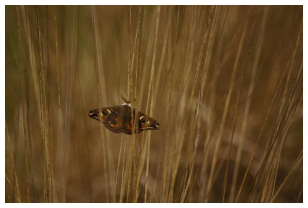 foto's, Nationaal park Dwingelderveld, Drenthe