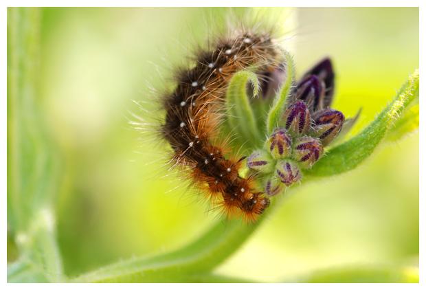 soorten, insect, insecten, insekt, insekten