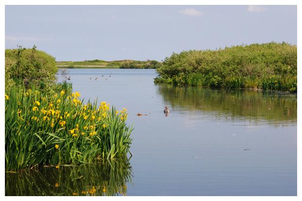 foto's, Natuurgebied Zwanenwater