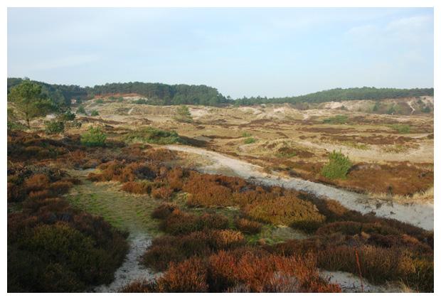 foto's, natuurgebied Harger- en Pettemerpolder, Noord Holland