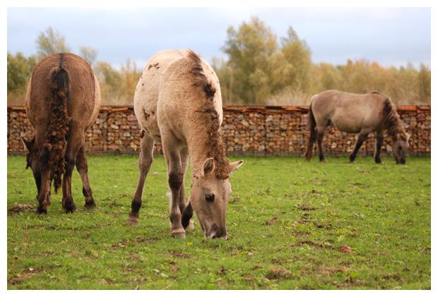 foto's, paard, paarden, paardenfotos, paardenfoto´s
