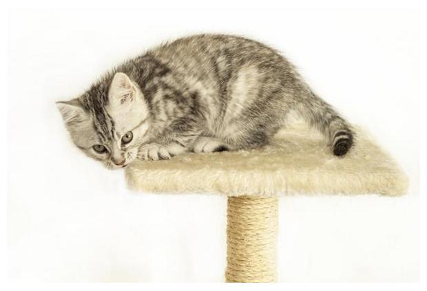 foto's, Kat of huiskat (Felis catus), poes, kitten