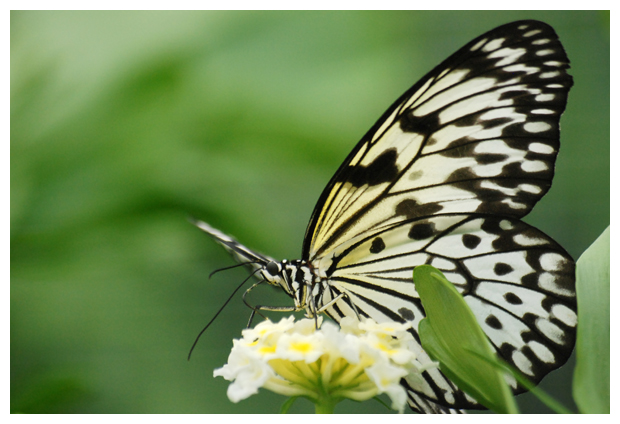 foto's, Vlindertuin, Vlindorado, Waarland