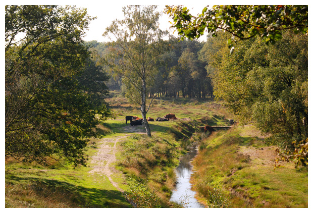 foto's, Natuurgebied Wolfhezerheide, Nederland