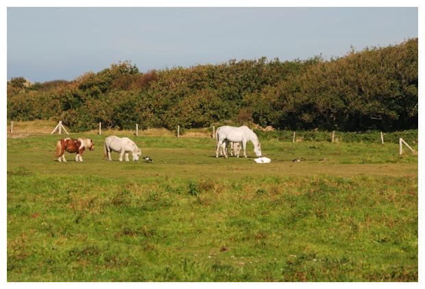 foto's, paard, paarden, paardenfotos, paardenfoto�s