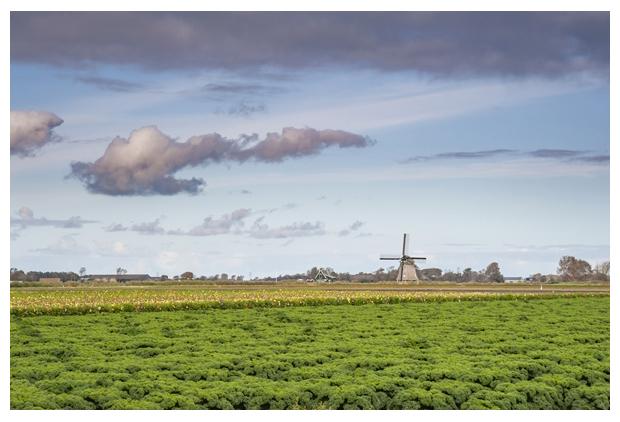 foto´s, Boerenkool (Brassica oleracea convar), kool