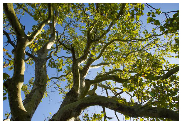 foto's, Nationaal Park De Biesbosch, Zuid-Holland, Noord-Brabant, Nederland