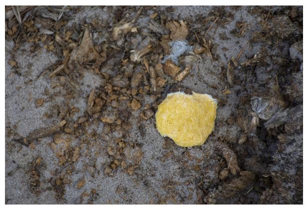 foto's, Heksenboter of runbloem (Fuligo septica), paddenstoel